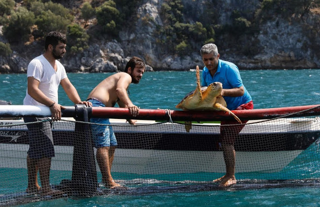 Saving Turkey's Turtles from builders and boats in İztuzu Beach