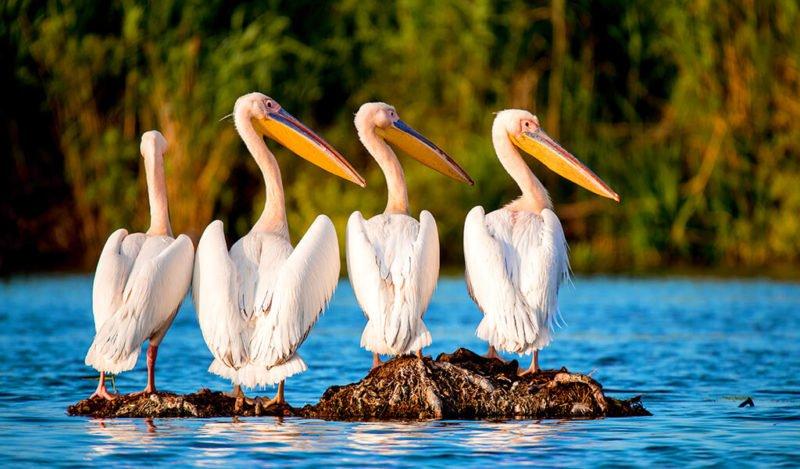 Manyas Bird Sanctuary/Bird Paradise