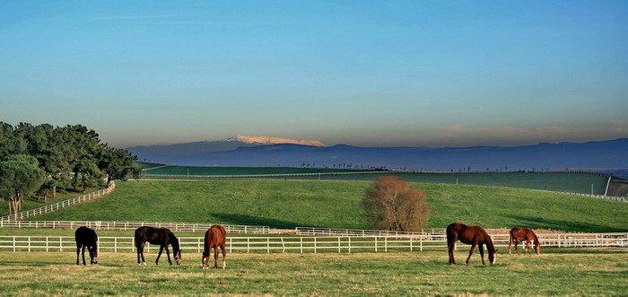 Karacabey Horse farms