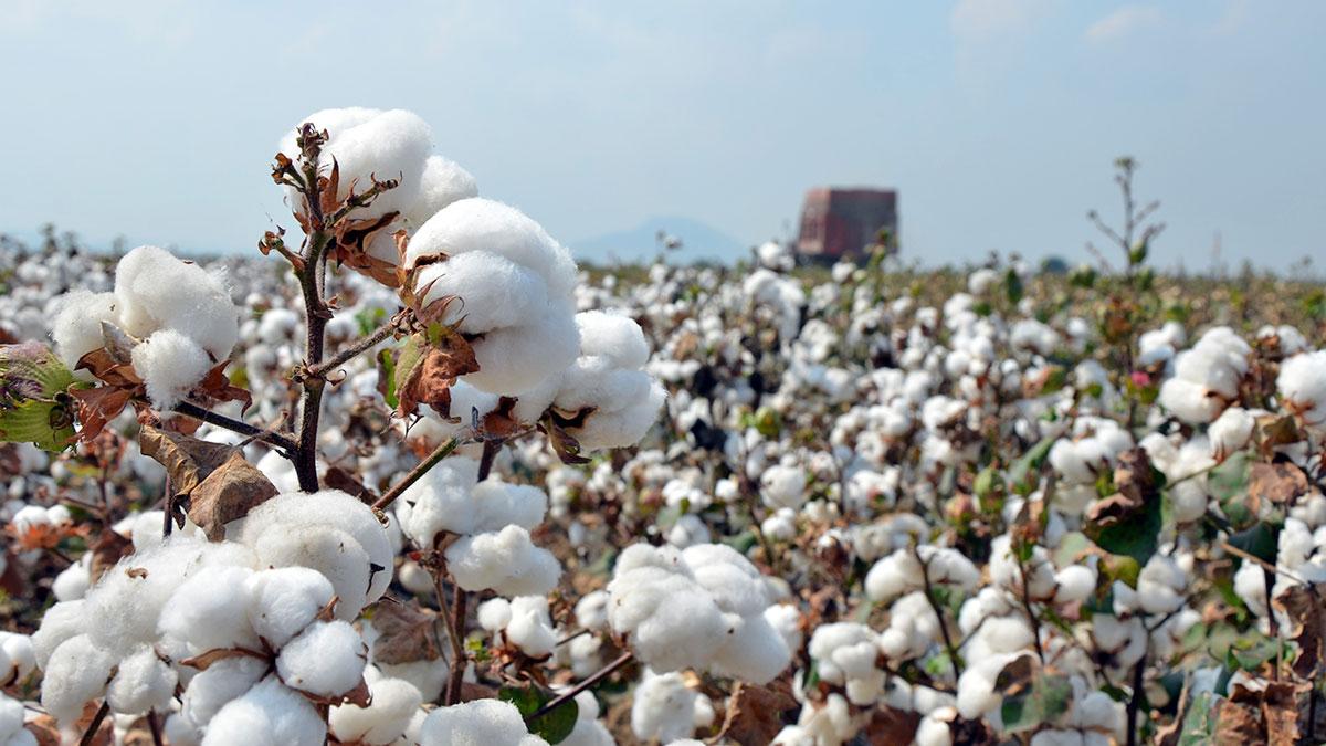 High-quality Turkish cotton